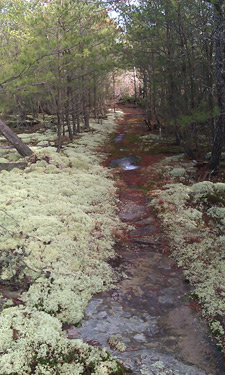 Trail through lichen patch